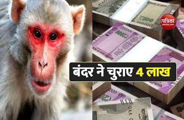 पेड़ पर चढ़ करने लगा नोटों की बारिश, बंदर ने चुराए 4 लाख रुपए