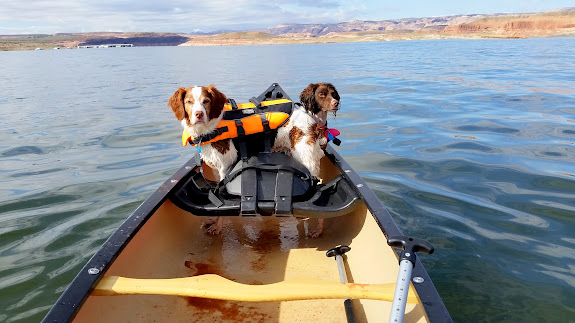 Using the dogs as ballast while I paddled solo