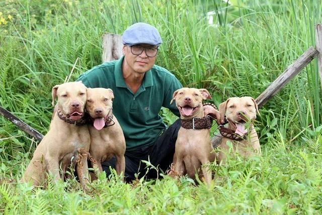 trại chó pitbull tuấn trắng hải phòng