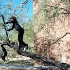 1 climbing tree.jpg