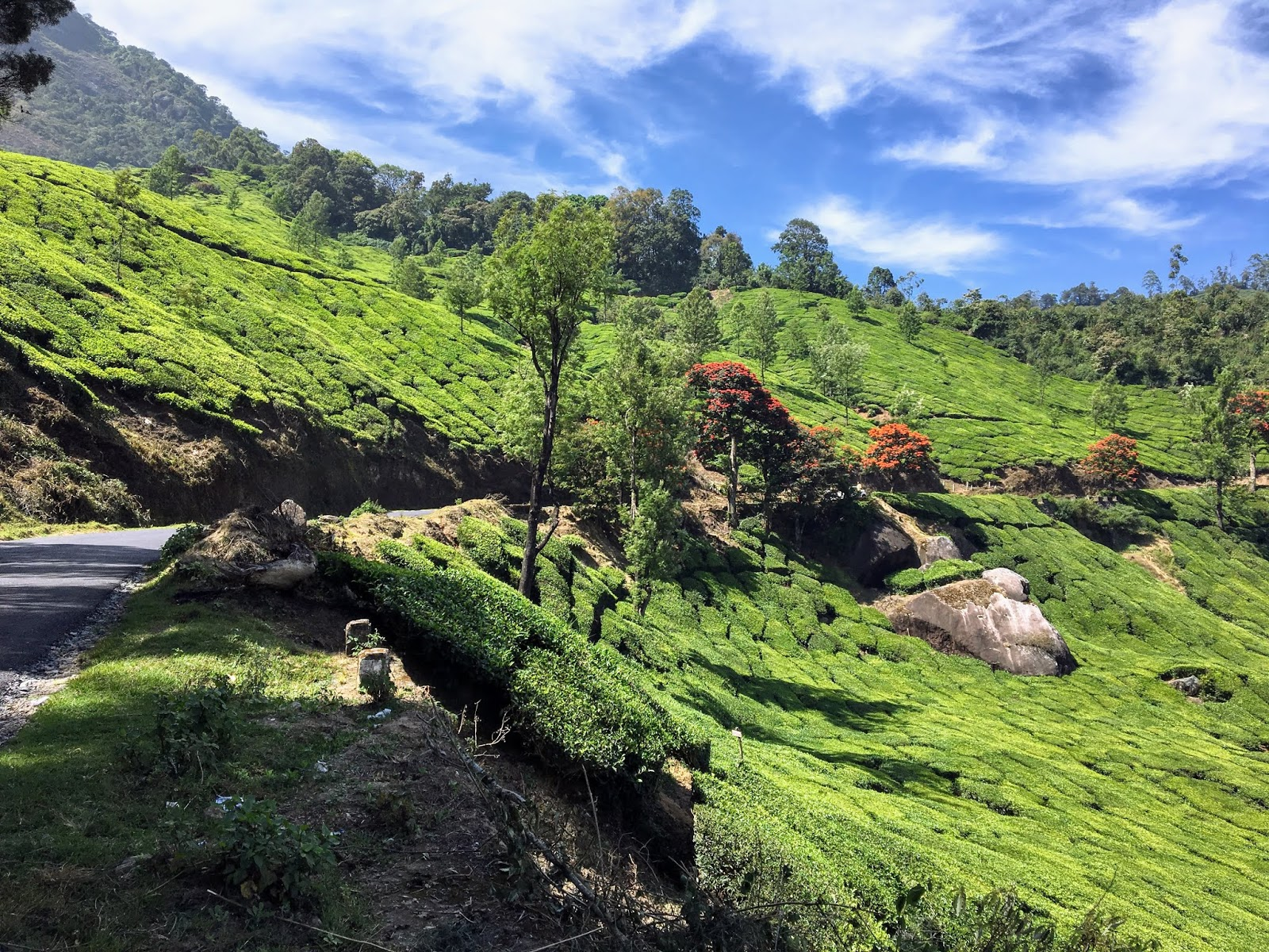 Road Trip to Munnar - Tea Gardens, Sightseeing, Dams, and Wildlife
