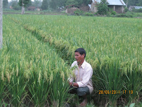 Photo: Farmer Lalku Kathariay of Lalbojhi at his SRI field. [Photo by Ram B. Khadka, June 2011]