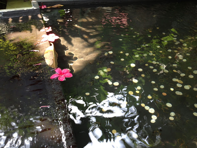 https://lh3.googleusercontent.com/-AOJS2gnj6-A/UerlgL7MU-I/AAAAAAAABpk/CKkWizLwkHk/s640-Ic42/flower-water.jpg