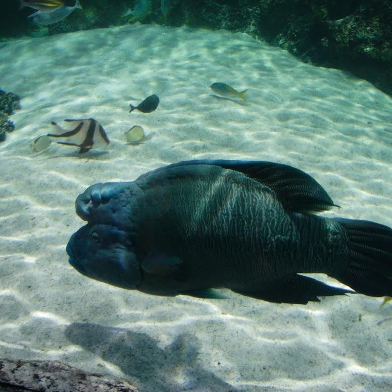 Aquarium_23.jpg