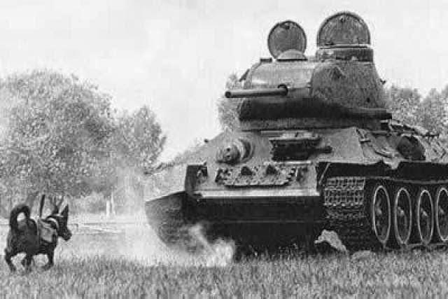 Cão anti-tanque na Segunda Guerra