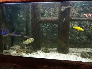 2016.03.14-037 poissons