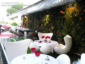 restaurant à st Tropez végétalisation du mûr grâce à la shaigne du chili