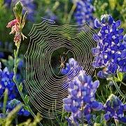 К чему снится паутина с пауком?