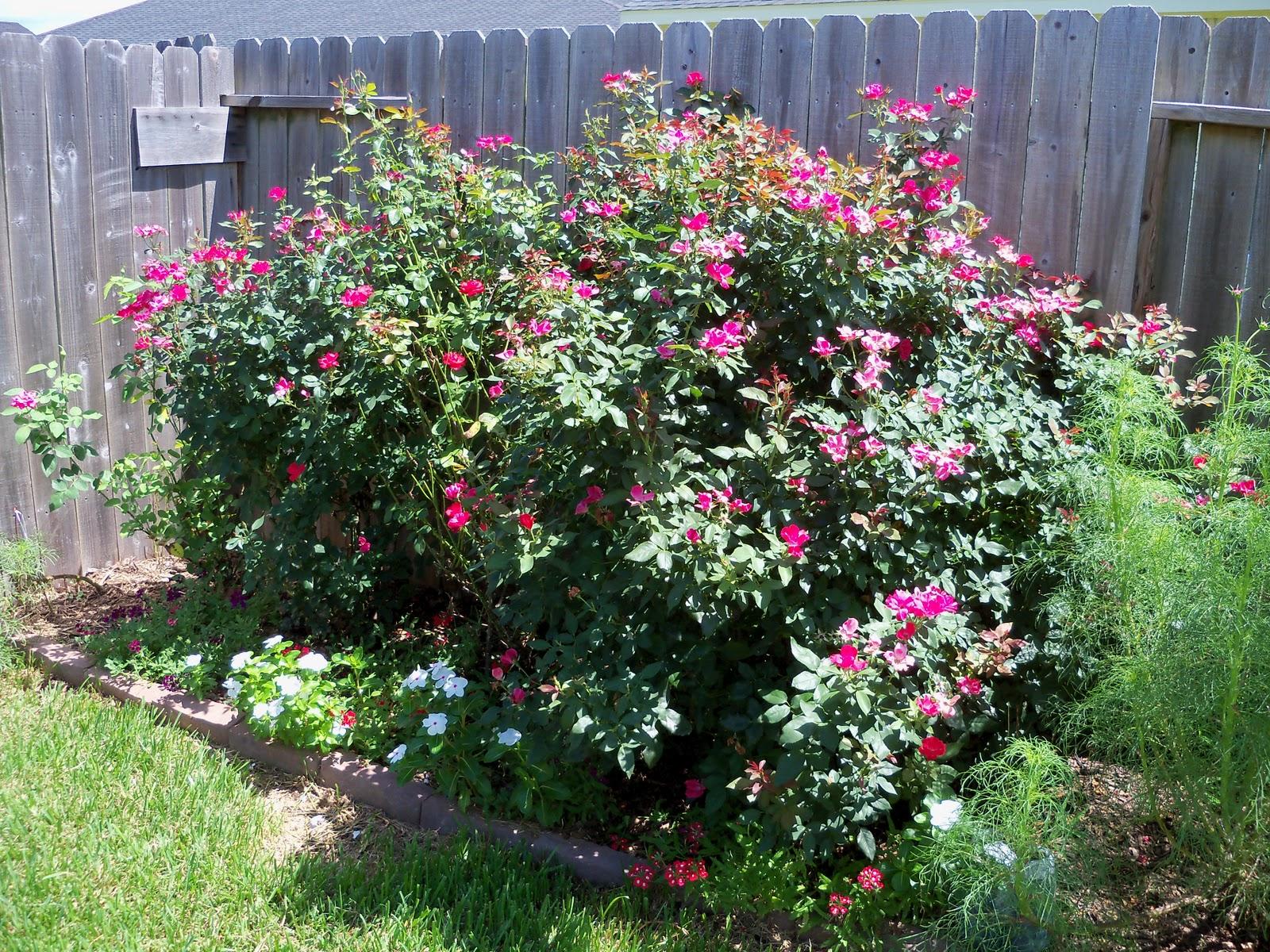 Gardening 2010, Part Three - 101_4451.JPG