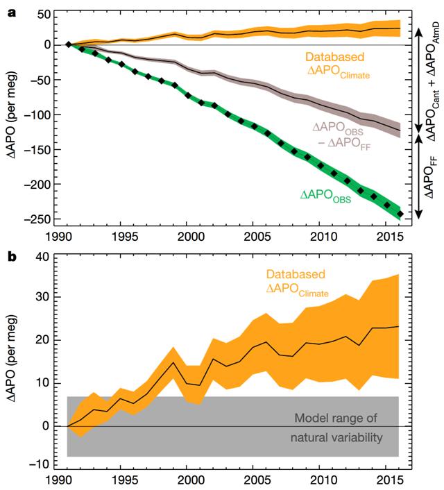 Databased estimates of global ∆APO Climate. a, ∆APO Climate estimated from observed APO (∆APO OBS) from the Scripps Institution of Oceanography network (1991–2016), and corrected by taking into account fossil-fuel burning, ocean anthropogenic carbon uptake and anthropogenic aerosol deposition. b, The increase in global ∆APO Climate (±1σ interval) exceeds the range of 26-year trends expected from the natural variations in four Earth system models (CESM, GFDL, IPSL and UVic, shown in grey). Graphic: Resplandy, et al., 2018 / Nature