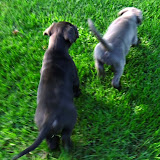 Sweety & Isla @ 5 weeks