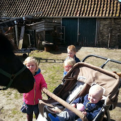 naar de paarden