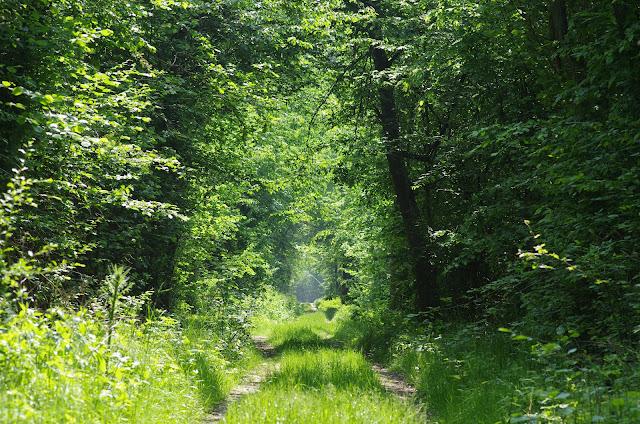 Les Hautes-Lisières (Rouvres, 28), 24 mai 2012. Photo : J.-M. Gayman