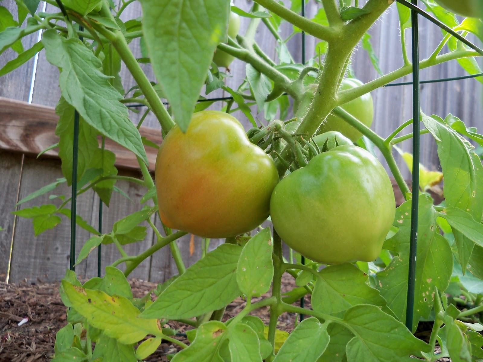 Gardening 2011 - 100_8521.JPG