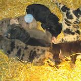 Saffy's babies @ 2 weeks