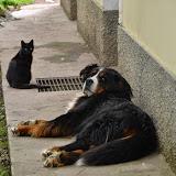 Domače živali-home animals - DSC_0268.jpg
