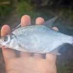 20140717_Fishing_Basuv_Kut_008.jpg