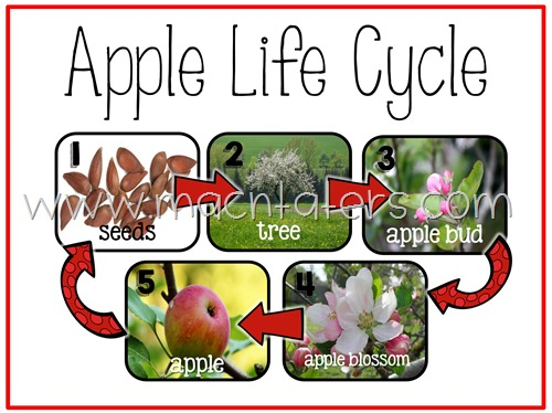 Apple Life Cycle Poster