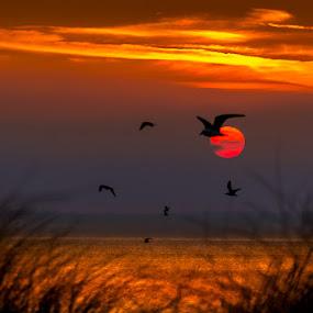 Sunbirds by Mike Shields - Landscapes Beaches ( water, sunset, beach, seaside, birds, gulls, sun, silhouette )