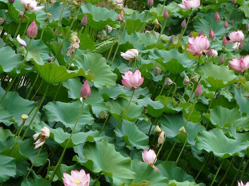Chine . Yunnan..Galamba, Menglian Album A - Picture%2B406.jpg