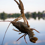 20140612_Fishing_BasivKut_003.jpg