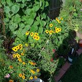 Gardening 2010, Part Three - 101_3929.JPG