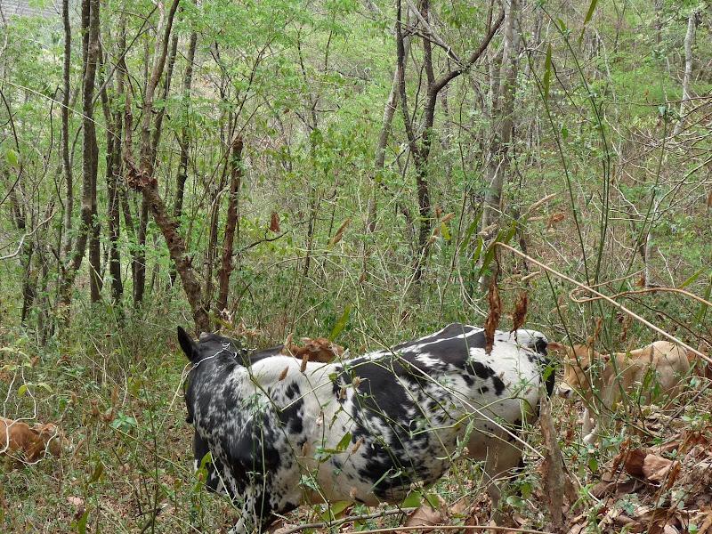 Chine: randonnée xishangbanna, région de Bada - Picture1%2B971.jpg