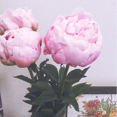 Peonies are so beautiful