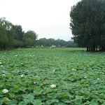 072china2008.jpg