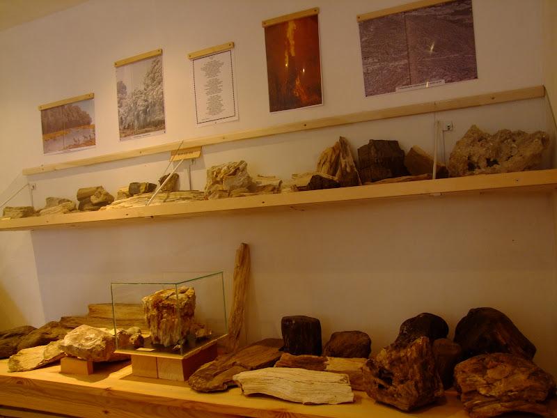 Fa kövületek Vanyarcon