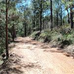 Along Pearl Beach / Patonga fire trail (219614)