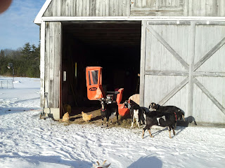 Snowblower in the barn behind goats and hens