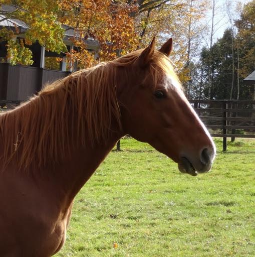 お馬さん大好き!♡I Love Horse♡