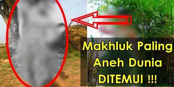 SUBHANALLAH...!!! SATU MAKHLUK ANEH TELAH DITEMUI DI THAILAND.jpg
