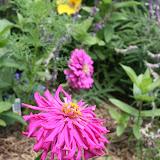 Gardening 2012 - IMG_3875.JPG