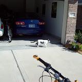 Ghost Cat Cometh - 101_5871.JPG