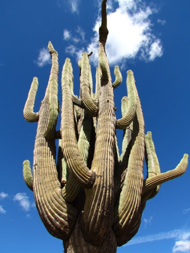 Saguaro50%25252B1-16_WithAdjustments-2-2017-03-13-09-20.jpg
