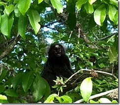 mico-camping-dunas-do-pero