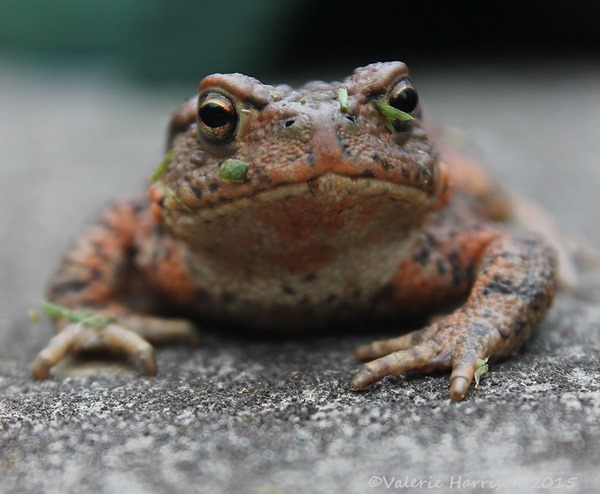 Toad-4