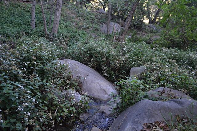 Romero Creek flowing over a rock