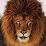Leo Lover's profile photo