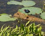 2011 - Brazos Bend State Park 6-20-2011 10-23-46 AM.JPG