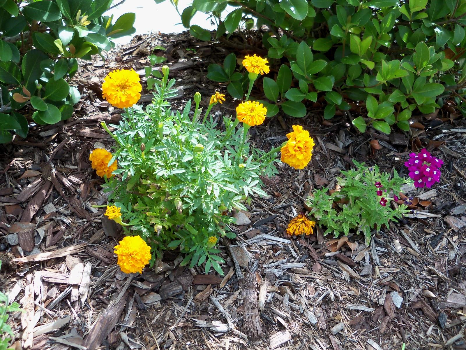Gardening 2010, Part Three - 101_3924.JPG