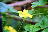 flower (77).jpg