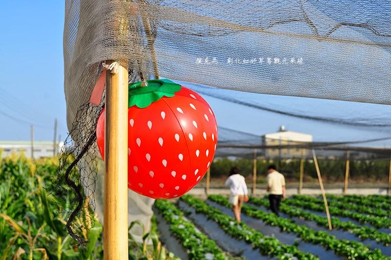 彰化虹妤草莓觀光果緣