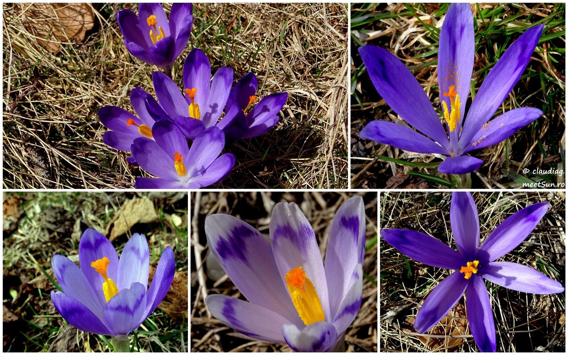 Flori De Primăvară Meetsunro