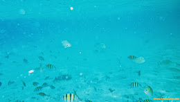 ngebolang-pulau-harapan-singletrip-nov-2013-pen-04