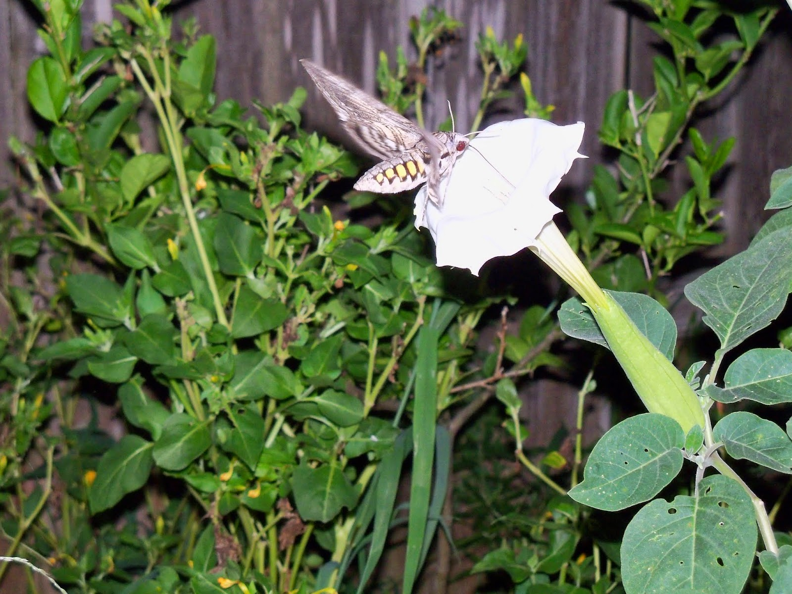 Gardening 2014 - 116_3596.JPG