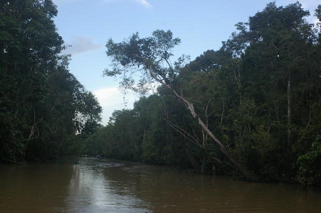 Sukau, Sungai Kinabatangan (Sabah, Malaisie, Bornéo), 3 août 2011. Photo : J.-M. Gayman