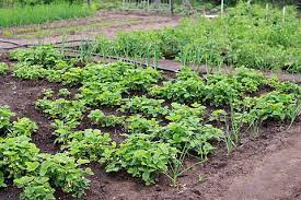 Definition of micro farming